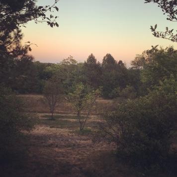 The Arnold Arboretum at Dust